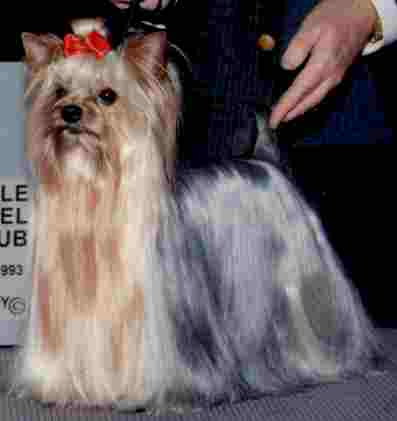 Award Winning Show Dogs Preston Country Club For Pets